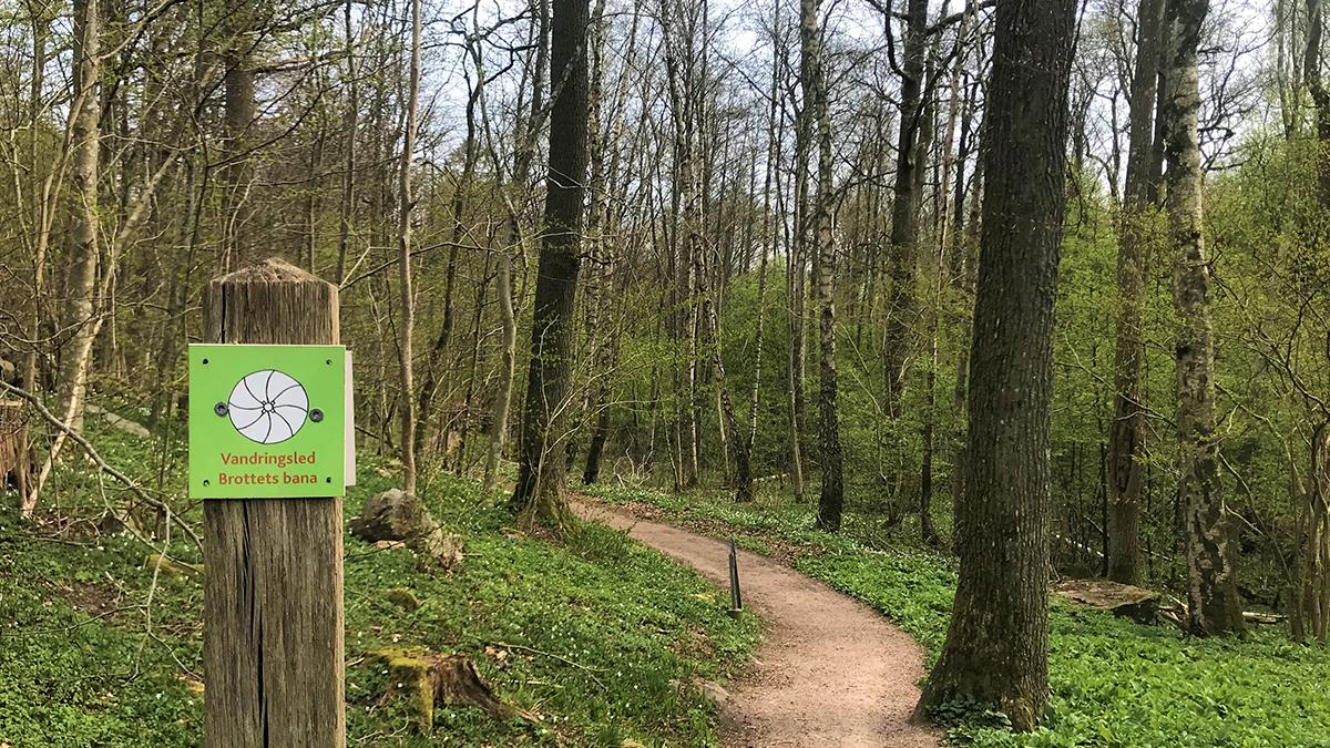 Bild på en vandringsled i skogen.