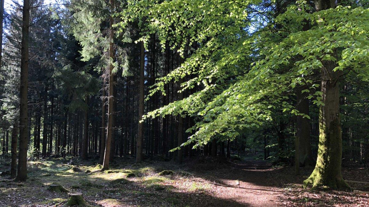 skogsbild från Ullstorpsslingan