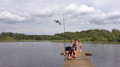 Gässen tillbaka på Vaxsjöns badplats