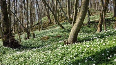 Möt våren i våra strövområden